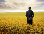 Businessman observing the wheatfield in front of him — ストック写真