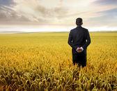 Uomo d'affari osservando il campo di grano davanti a lui — Foto Stock