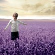 Foto Stock: Lavender field