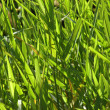 Abstract Background of River Grass — Stock Photo