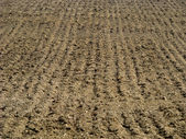 Background of a plowed field — Stock Photo