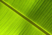 Abstract background of tropical leaf — Stock Photo