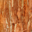 Stock Photo: Background Texture Of Paperbark Tree
