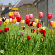 Tulips in Churchyard — Stock Photo