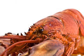Cooked fresh lobster — Stock Photo