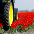 Tractor on the tulip field — Stock Photo #2731354