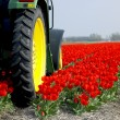 Tractor on the tulip field — Stock Photo