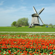 Stock Photo: Windmill in Netherlands