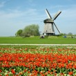 Windmill in Netherlands - Stock Photo