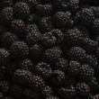 Blackberries — Stock Photo #2735110