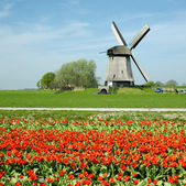 Windmill in Netherlands — Stock Photo