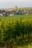 Alsace — Stock Photo