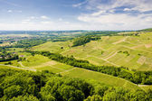 Vineyard in France — Stock Photo