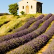 Plateau de Valensole — Stock Photo #2816028