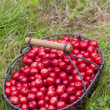 Cherries — Stock Photo #2822528