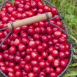 Cherries — Stock Photo #2842945