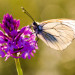 Butterfly with flower - Stock Photo