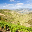 Stock Photo: Vineyards in Douro