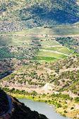 Douro valley — Stockfoto