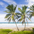 Barbados — Stock Photo #2920066
