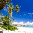 Stock Photo: Barbados