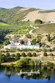 Vineyards in Douro — Stock Photo