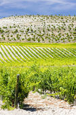 Vineyard in Spain — Stock Photo