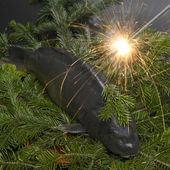 Christmas carp — Stock Photo