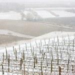 Winter vineyards — Stock Photo #2969179