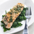 Salmon — Stock Photo #2975606