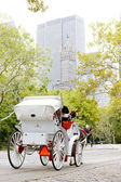 Central Park, — Stock Photo