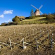 Stock Photo: Champagne Region