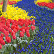 Keukenhof Gardens — Stock Photo #3004218