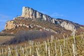 Burgundy — Stock Photo