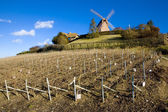 Champagne Region — Stock Photo