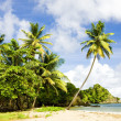 Tobago — Stock Photo #3037372
