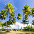 Stock Photo: Tobago