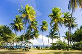 Tobago — Stock Photo