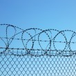 Stock Photo: Barbed wires