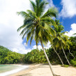 Tobago — Stock Photo