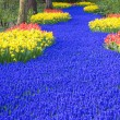 Keukenhof Gardens — Stock Photo #3062439