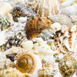 Stock Photo: Seashells