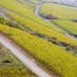 Vineyards in Germany — Stock Photo #3102466