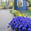 Keukenhof Gardens — Stock Photo #3102843