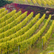 Vineyards in Germany - Foto de Stock