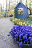Keukenhof Gardens — Stock Photo