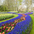 Keukenhof Gardens — Stock Photo #3117919
