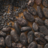Cacao beans — Stock Photo