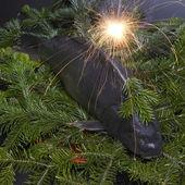 Christmas carp — Stock Photo