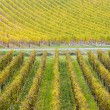 Vineyards in Germany — Stock Photo